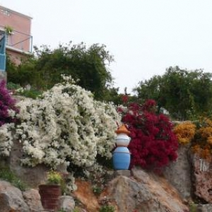 Fleurs printanieres