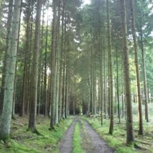 Passage en foret entre Driicht et Buret