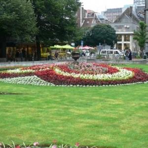 Liege : decoration florale de la place de la Cathedrale