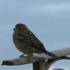 Oiseau de chez nous