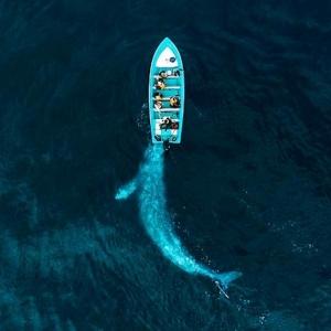 9 Baleine jouant avec des touristes, Puerto Adolfo Lopez Mateos, Baja California, Mexique © Joseph Cheires - Drone Awards 2020