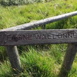 Fagne wallonne ( photo de F. Detry )