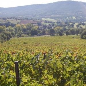 Vignobles sardes