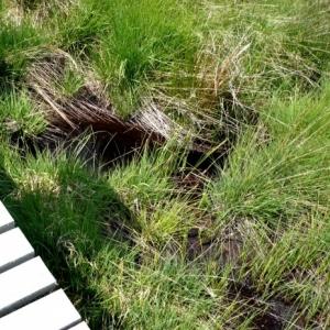 Caillebottis sur la zone humide ( photo O. Servais )