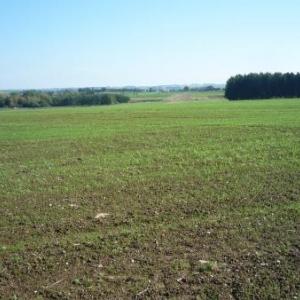 A hauteur de la borne - frontiere 265 : champs cultives ( cote Hachiville ( GD Luxembourg )