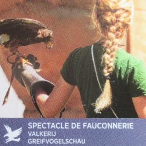 Nouveaute 2017 : spectacle de fauconnerie