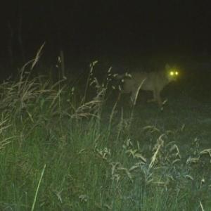 Un loup a de nouveau été aperçu mi-février dans les Hautes-Fagnes.