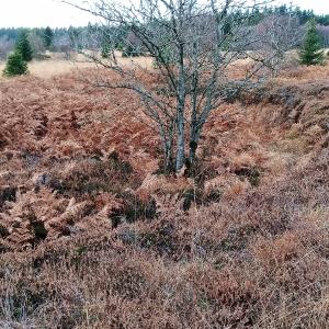 Une ancienne zone de prélèvement de tourbe