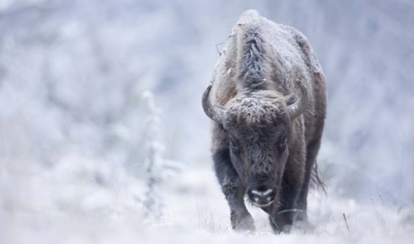 """""""Yellowstone"""" (c) Michel d Oultremont"""