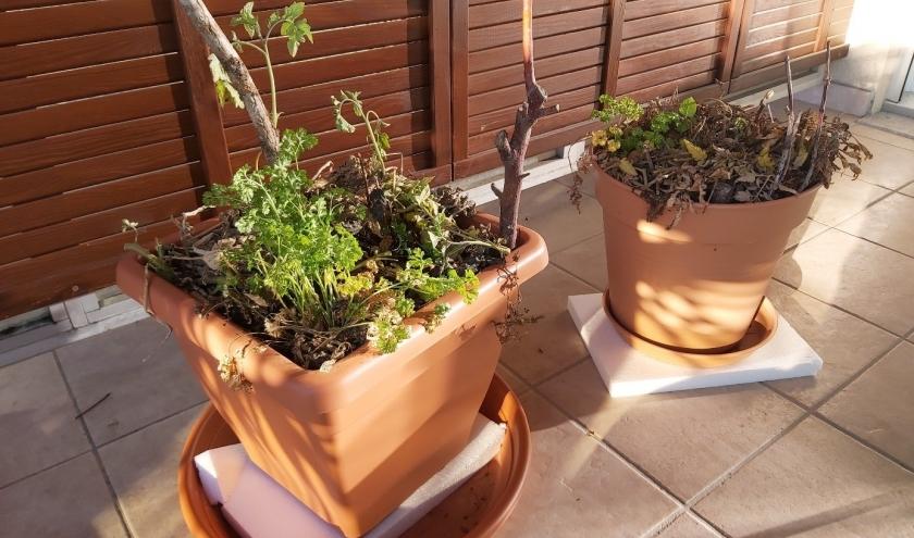 La permaculture pour sauver vos plantes