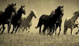 Transport de chevaux internationaux