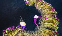 1 Récolte des nénuphars, Long An, Vietnam  © Trung Pham Huy - Drone Awards 2020