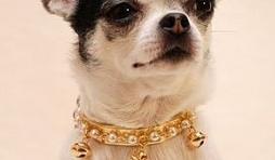 """"""" L'univers animalier """" à Hotton : For Pets Only : nouvelle collection colliers & laisses"""